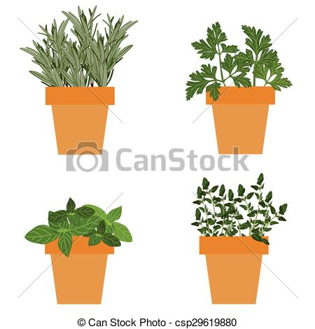 Vector of Set of vector culinary herbs in pots with fresh thyme.