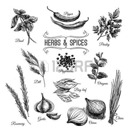 63,980 Herb Cliparts, Stock Vector And Royalty Free Herb Illustrations.