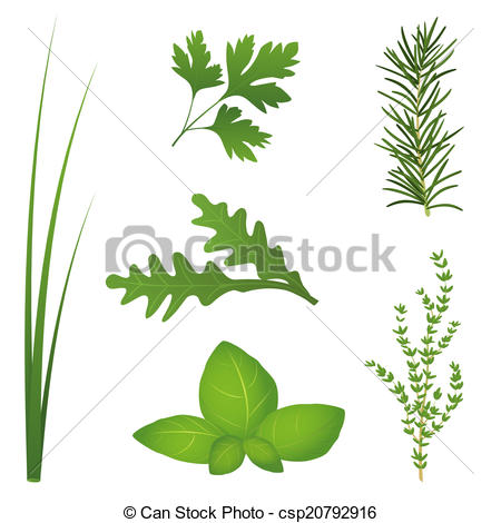 Vector Clip Art of Culinary Herbs.
