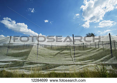 Stock Photograph of Fabric covering over plants on farm; Cullinan.