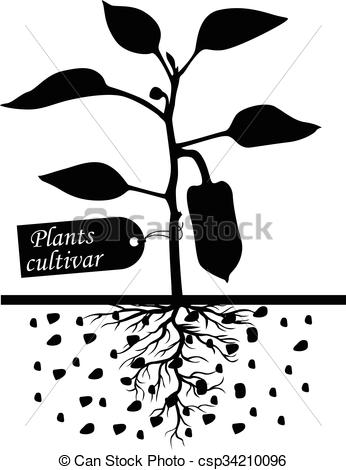 EPS Vectors of Pepper plants with label cultivar.