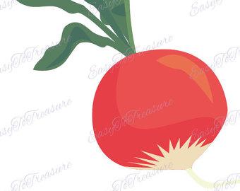 Radish illustration.