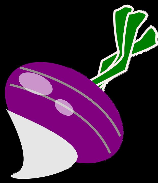 Free vector graphic: Turnip, Radish, Cultivated Radish.