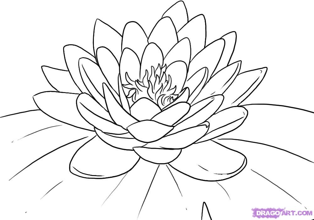 Water flowers clipart japanese.