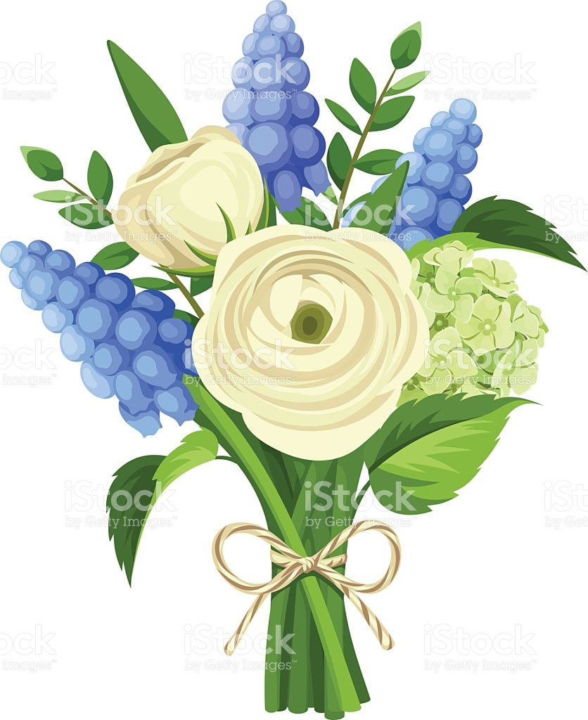 Bouquet Of White Ranunculus And Blue Grape Hyacinth Flowers Vector.