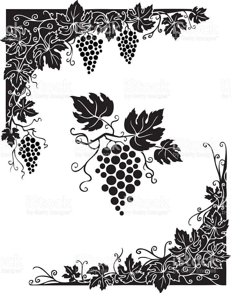 Vine Leaves And Grapes In Black And White stock vector art.