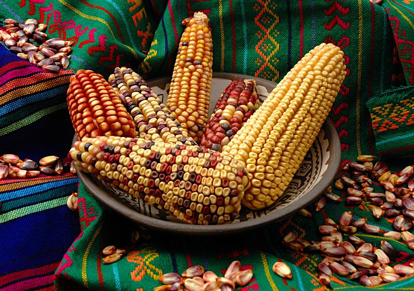 Maize culture, Mexico.