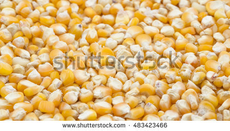 Maize Culture Stock Photos, Royalty.