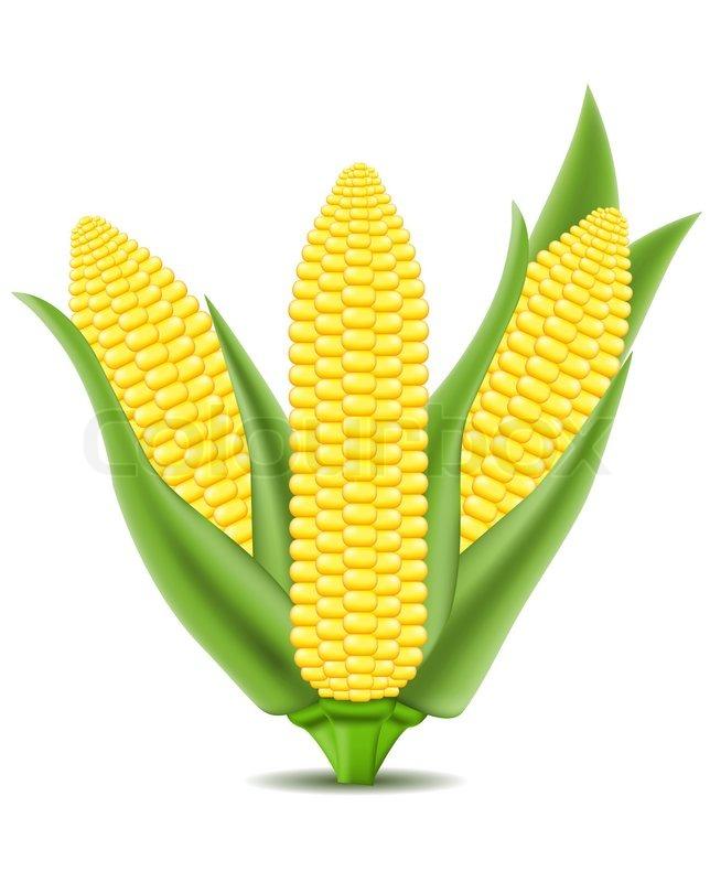 Corn illustration.