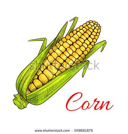 Maize Vectores, imágenes y arte vectorial en stock.