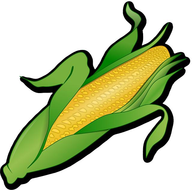 Free photo Corn Agriculture Cereals Nature Epi Culture.