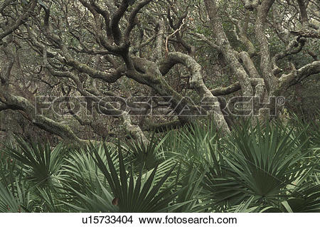 Stock Photo of Cumberland Island National Seashore, GA, Golden.