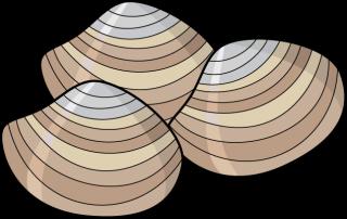 Shellfish Information.