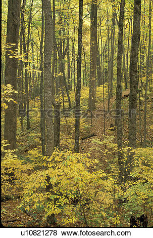 Pictures of tree, forest, Georgia, GA, Sosebee Cove Scenic Area in.