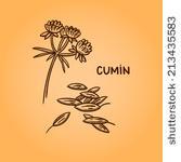 Cumin Vectors, Cumin Illustrations and Cumin Clip Arts.