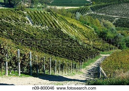 Stock Images of Vineyards, Barolo, Province of Cuneo, Piedmont.