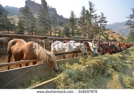 Wyoming Ranch Stock Photos, Royalty.