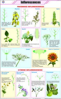 Flower Terminology (Part 3).