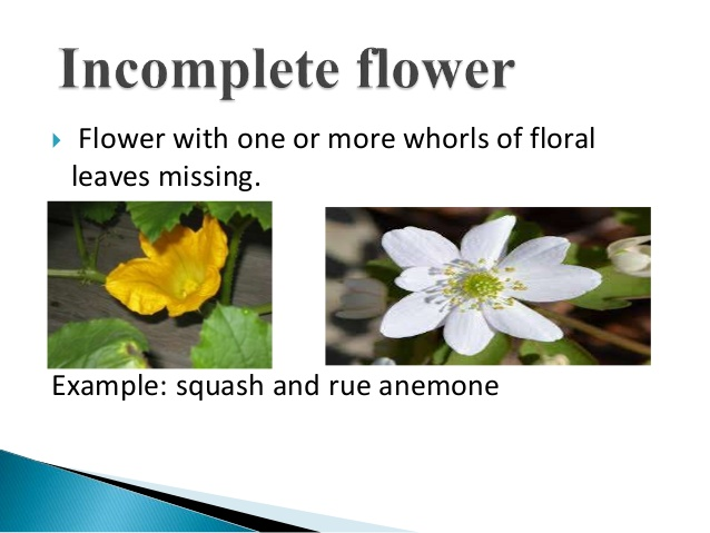 Flowers: Parts and Functions.