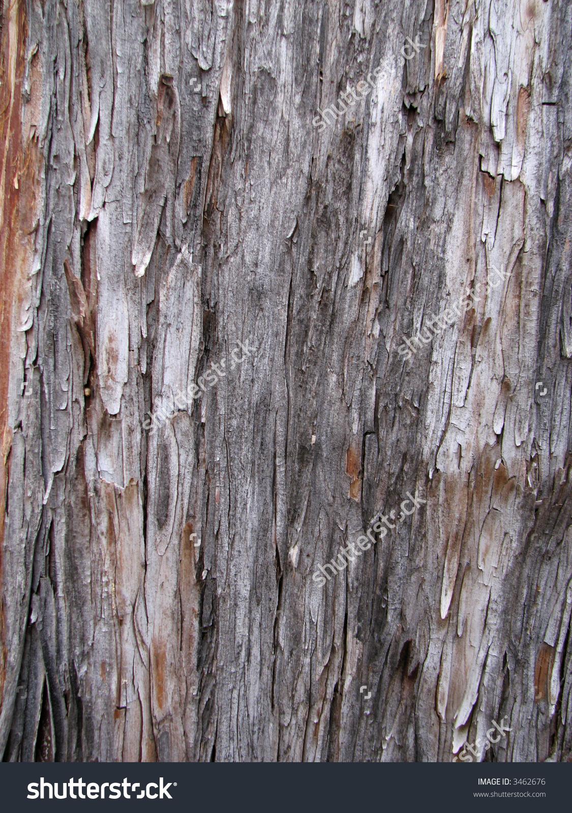 Arizona Cypress (Cupressus Arizonica) Bark Detail Stock Photo.