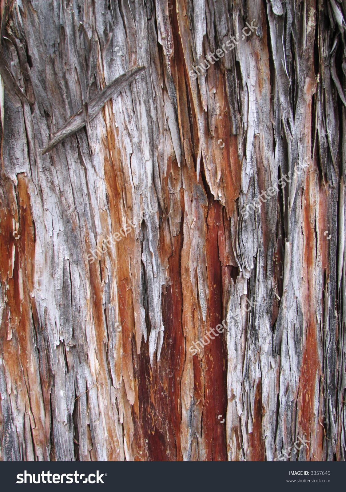 Peeling Arizona Cypress (Cupressus Arizonica) Bark Detail Stock.