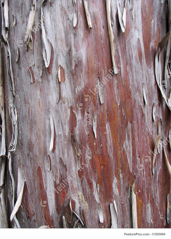 Peeling Arizona Cypress Bark Image.