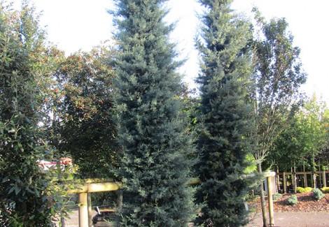 Trees « Chew Valley Trees.