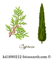 Cupressus Clipart Royalty Free. 8 cupressus clip art vector EPS.