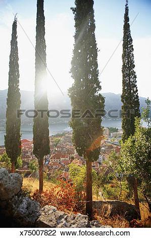 Stock Photo of Republic of Montenegro, Kotor, cypress trees.