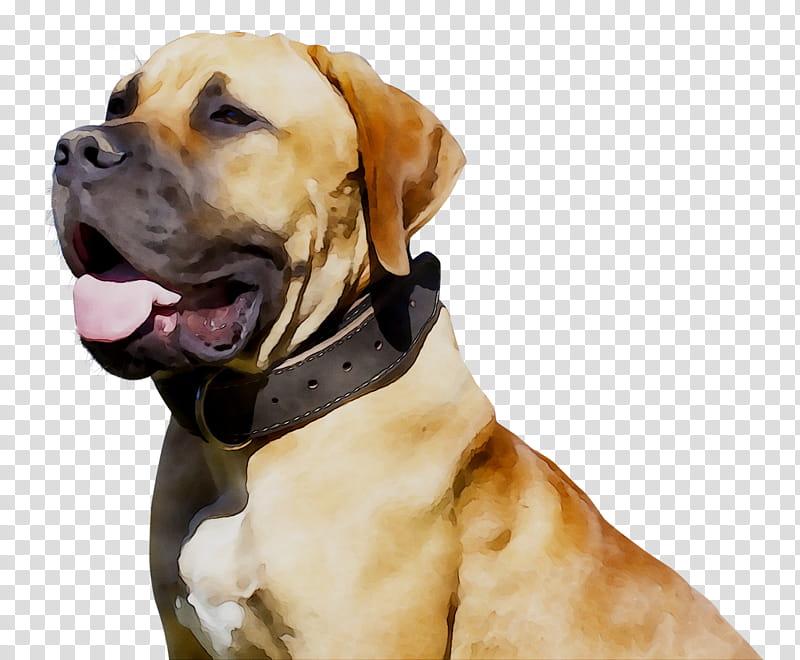Dogs, Black Mouth Cur, Boerboel, Snout, Police Dog, Pet.