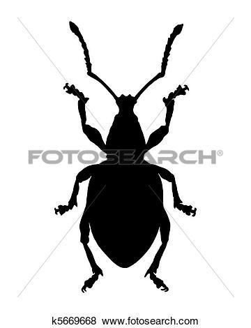 Curculionidae clipart #18