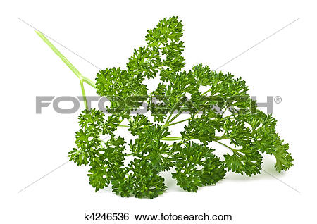 Stock Images of Curly Parsley k4246536.