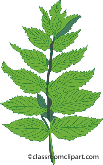 Herb plant clipart.