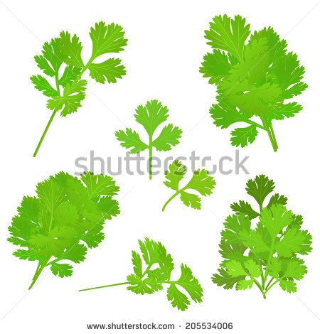 Curly Parsley Stock Photos, Royalty.