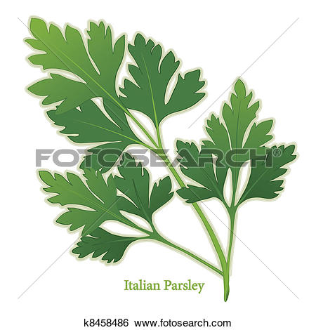 Clipart of Curly Parsley Herb Icon k14108953.