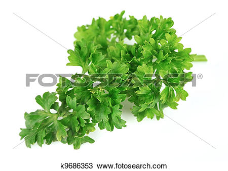 Stock Photo of curly parsley k9686353.