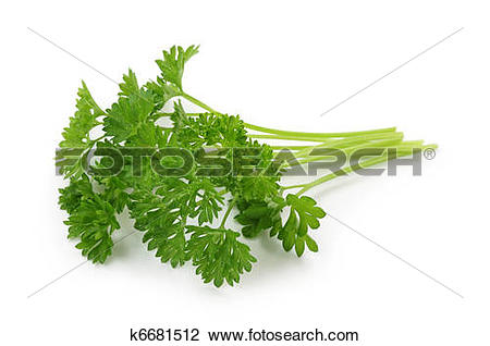 Stock Photo of Curly leaf parsley k6681512.