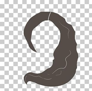 Long Curly Hair PNG Images, Long Curly Hair Clipart Free Download.