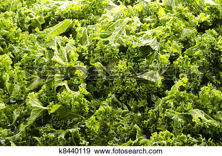 Stock Photograph of Washed and sliced curly kale k8440119.