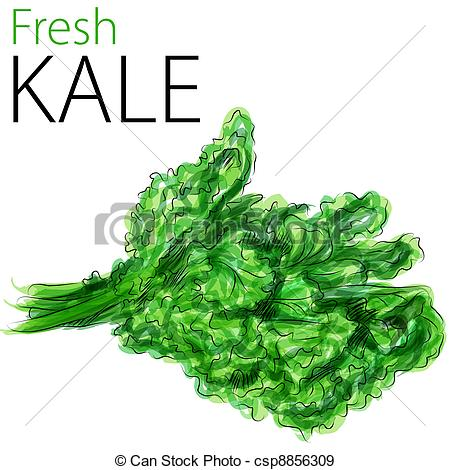 Kale Clipart Vector Graphics. 384 Kale EPS clip art vector and.