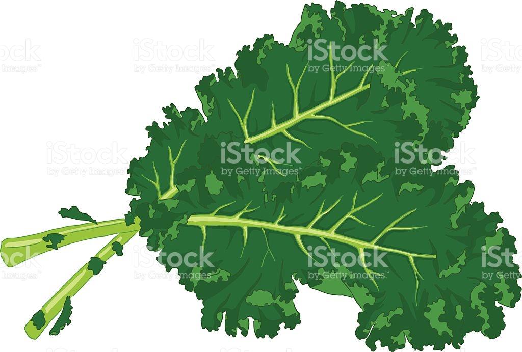 Kale clipart #6