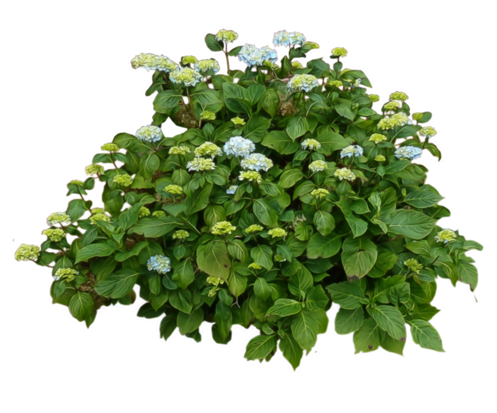 Shrubs clipart invisible background.