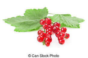 Stock Photographs of Red currant shrub.