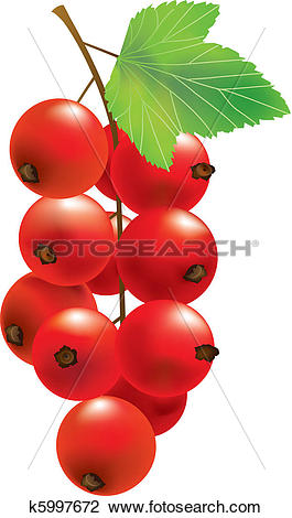 Clipart of Vector red currant k5997672.