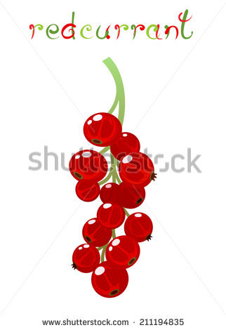 Red Currant Berry. Illustration Of Brunch Fresh Ripe Redcurrant.