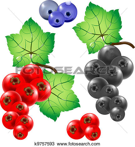 Clipart of currant k9757593.