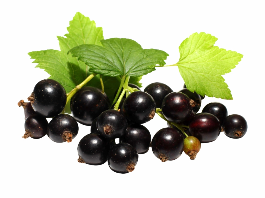Currant Png Free PNG Images & Clipart Download #3207114.