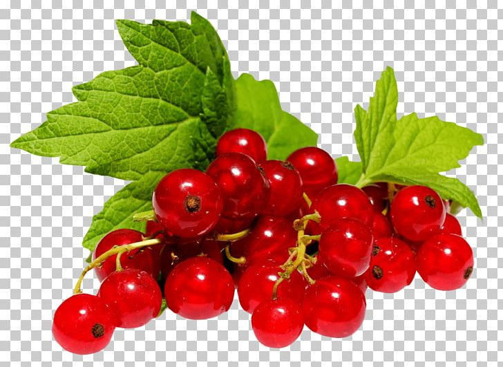 Zante Currant Redcurrant Blackcurrant Berry PNG, Clipart, Free PNG.