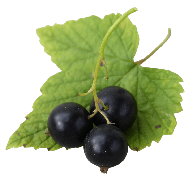 Download Free png black currant.