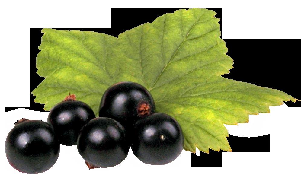 Black Currant PNG Image.